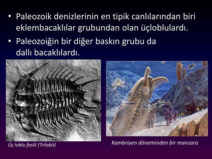 Paleozoik denizlerinin en tipik canllarndan biri eklembacakllar grubundan olan