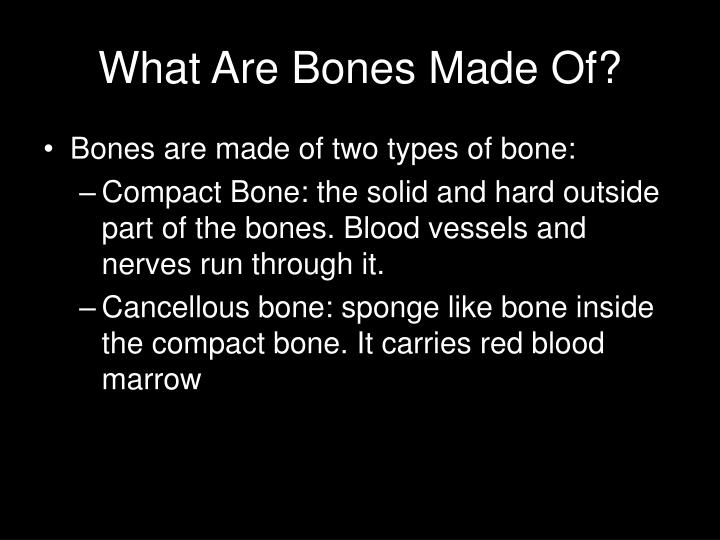 What Are Bones Made Of?