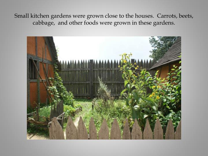Small kitchen gardens were grown close to the houses.  Carrots, beets, cabbage,  and other foods were grown in these gardens.