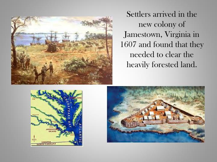 Settlers arrived in the new colony of Jamestown, Virginia in 1607 and found that they needed to clea...