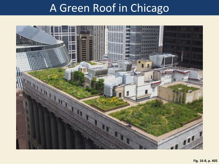 A Green Roof in Chicago