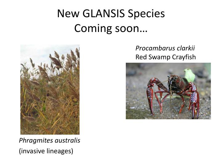 New GLANSIS Species