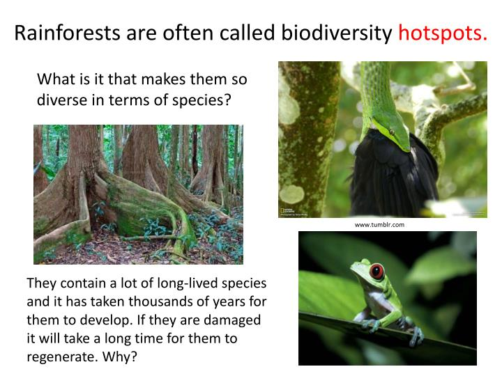 Rainforests are often called biodiversity