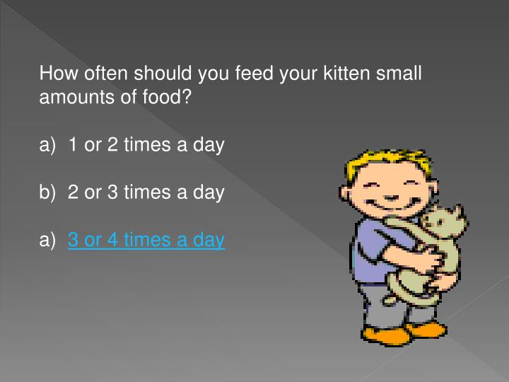 How often should you feed your kitten small amounts of food?