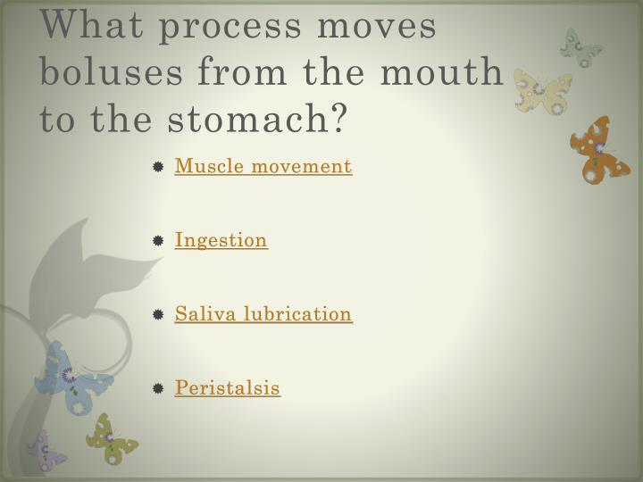 What process moves boluses from the mouth to the stomach?