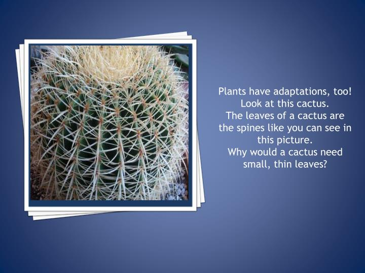 Plants have adaptations, too!