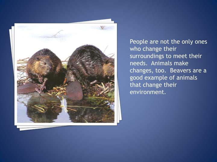 People are not the only ones who change their surroundings to meet their needs.  Animals make changes, too.  Beavers are a good example of animals that change their environment.