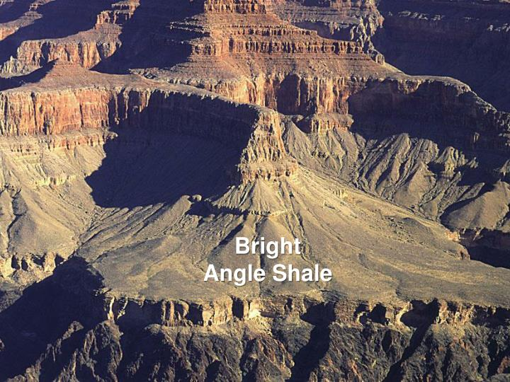 Bright Angle Shale