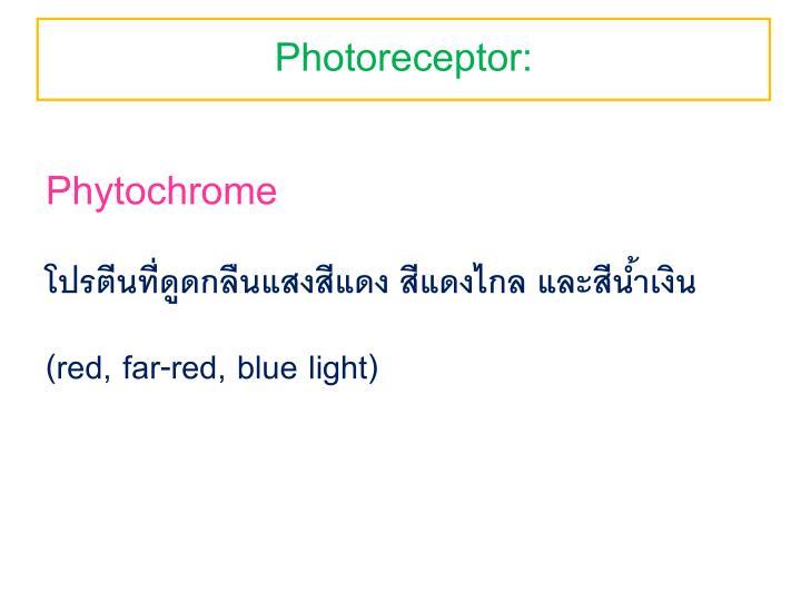 Photoreceptor: