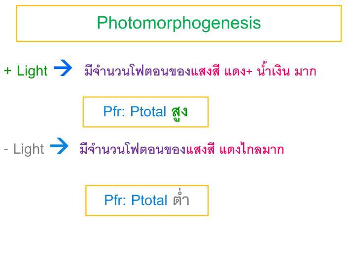 Photomorphogenesis