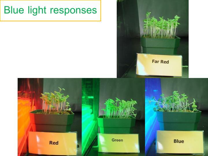 Blue light responses