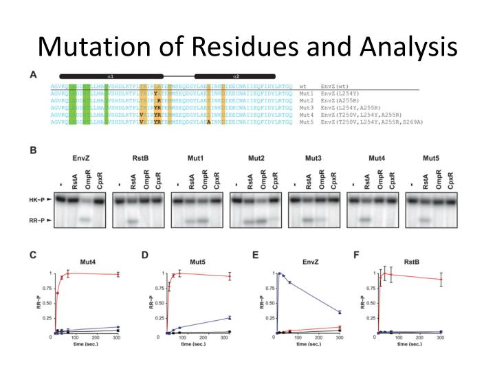 Mutation of Residues and Analysis