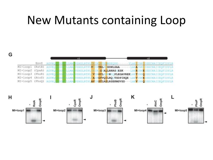 New Mutants containing Loop