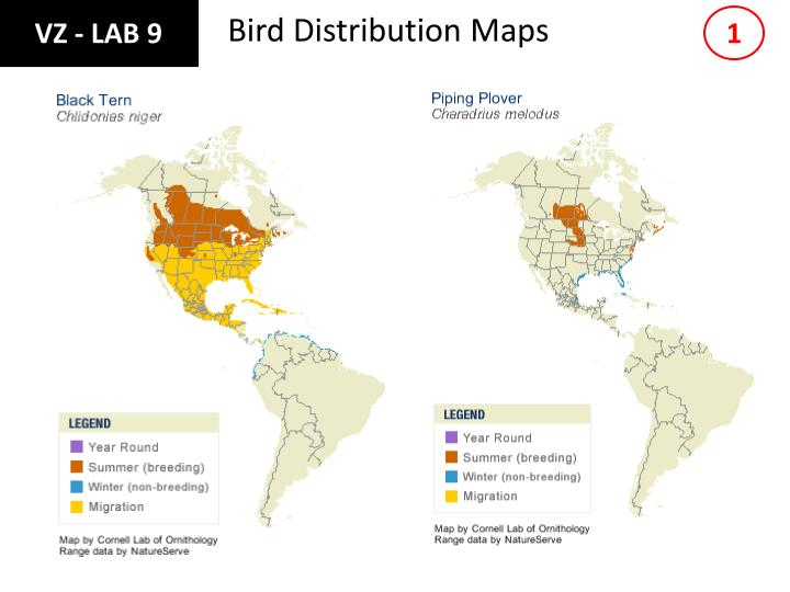 Bird distribution maps
