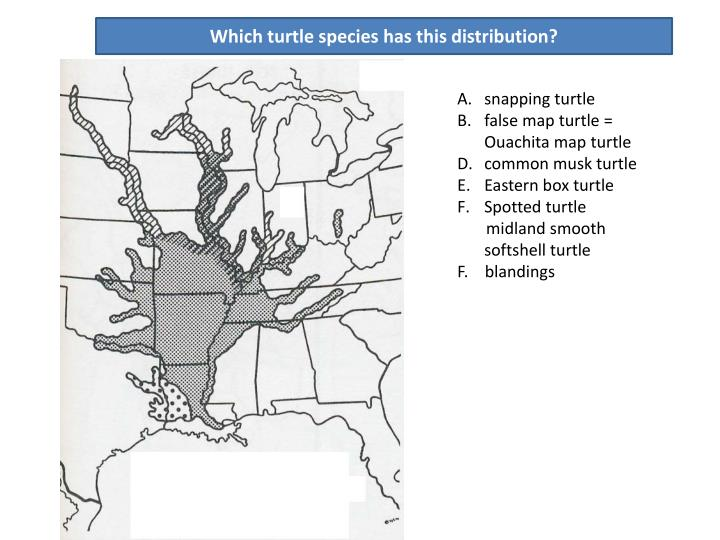 Which turtle species has this distribution?