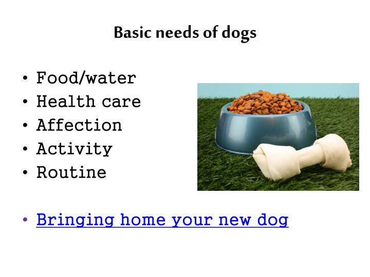 Basic needs of dogs