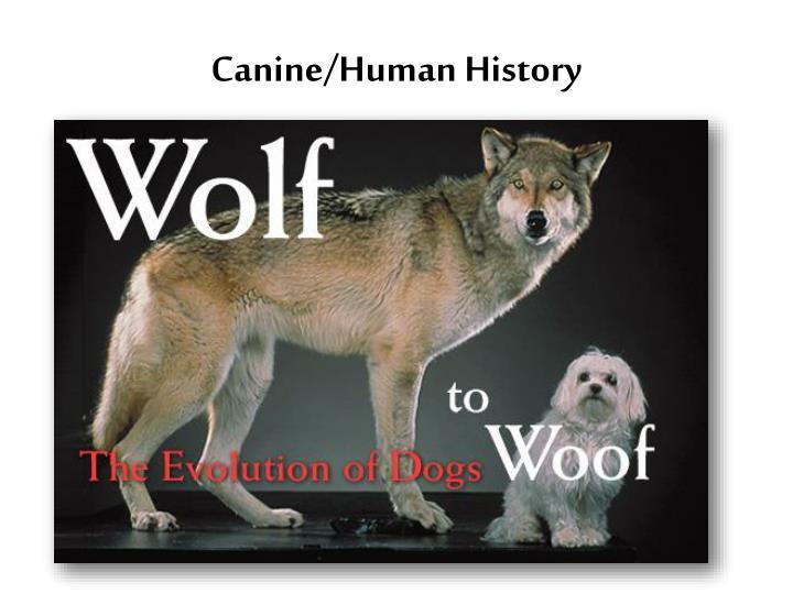 Canine/Human History