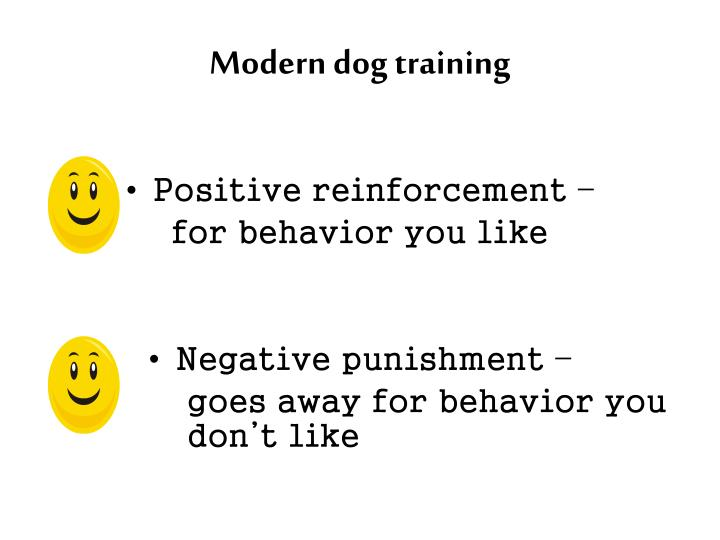 Modern dog training