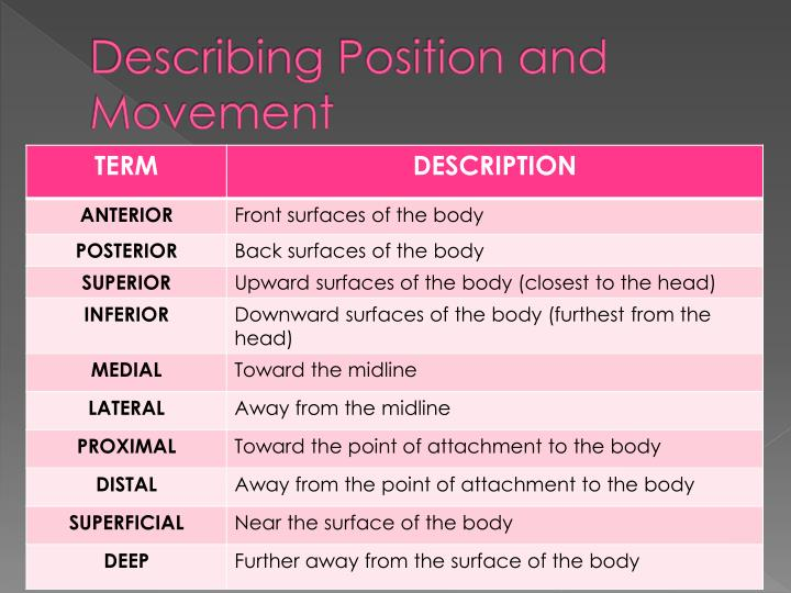 Describing Position and Movement