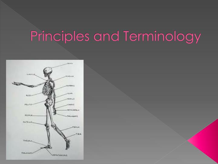 Principles and Terminology