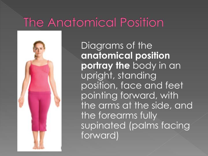 The Anatomical Position