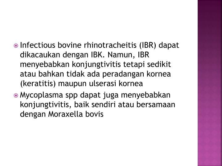 Infectious bovine rhinotracheitis (IBR) dapat dikacaukan dengan IBK. Namun, IBR menyebabkan konjungtivitis tetapi sedikit atau bahkan tidak ada peradangan kornea (keratitis) maupun ulserasi kornea