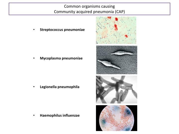 Common organisms causing