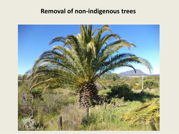 Removal of non-indigenous trees