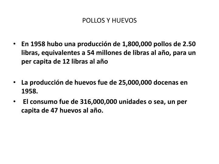 POLLOS Y HUEVOS
