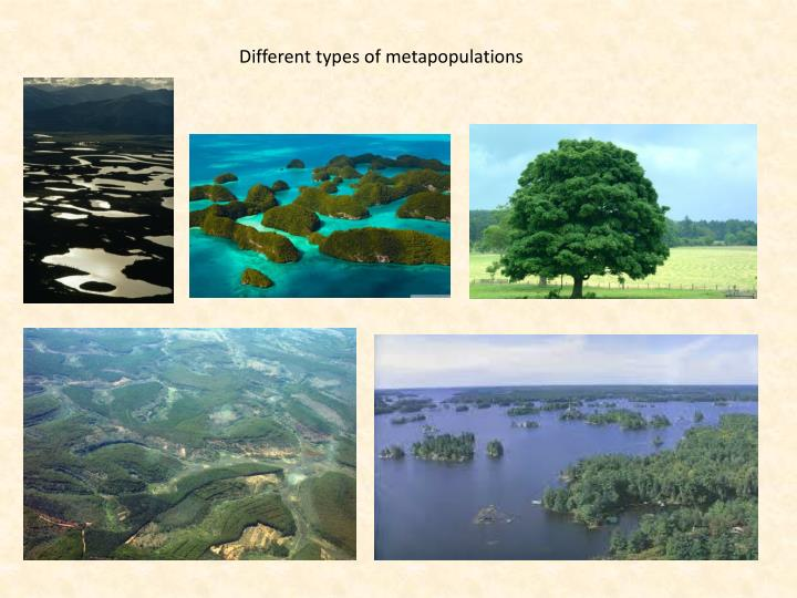 Different types of metapopulations