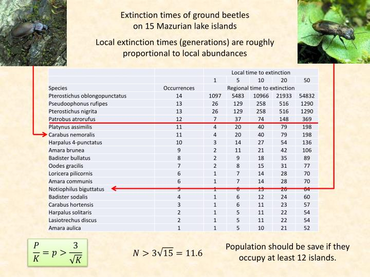 Extinction times of ground beetles on 15 Mazurian lake islands
