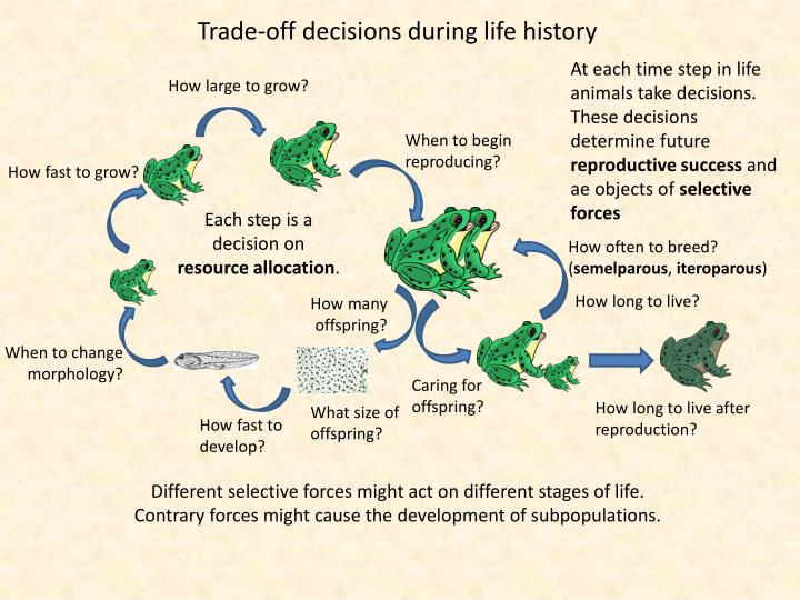Trade-off decisions during life history