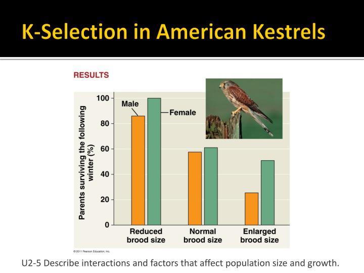 K-Selection in American Kestrels