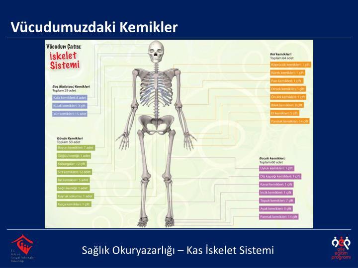 Vücudumuzdaki Kemikler
