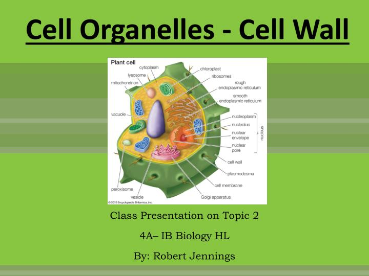 Cell Organelles - Cell Wall