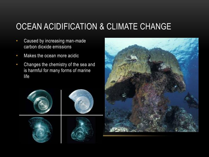 Ocean acidification climate change