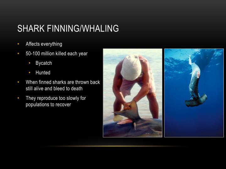 Shark Finning/Whaling