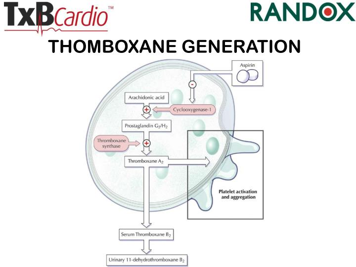 THOMBOXANE GENERATION