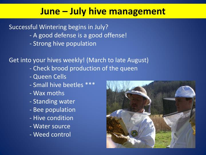June – July hive