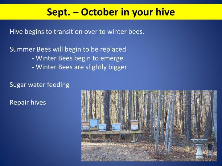 Sept. – October