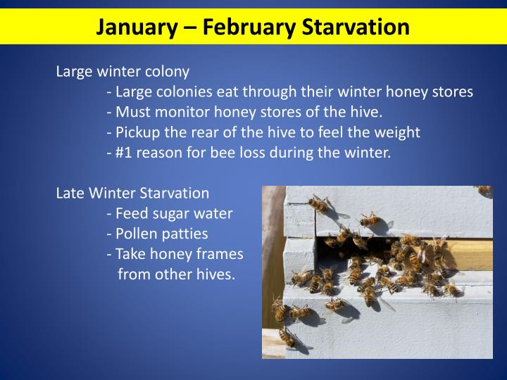 January – February Starvation