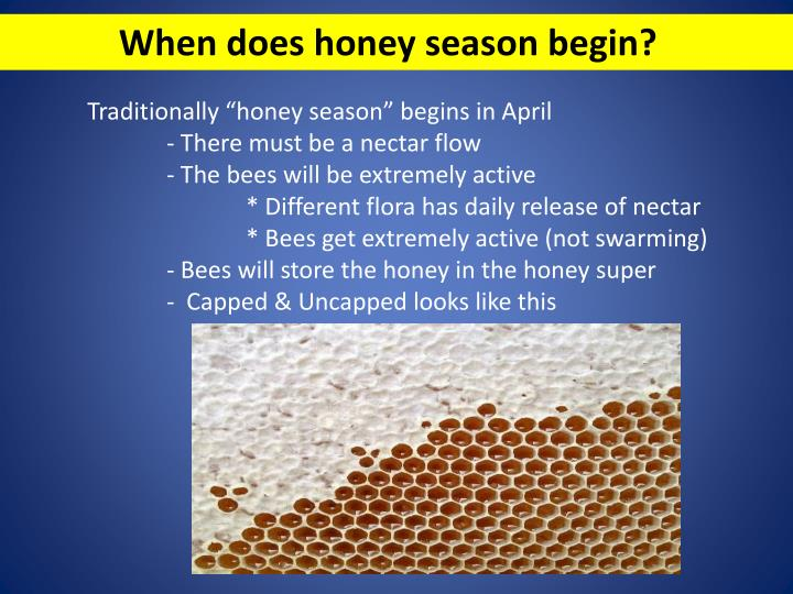 When does honey season begin?
