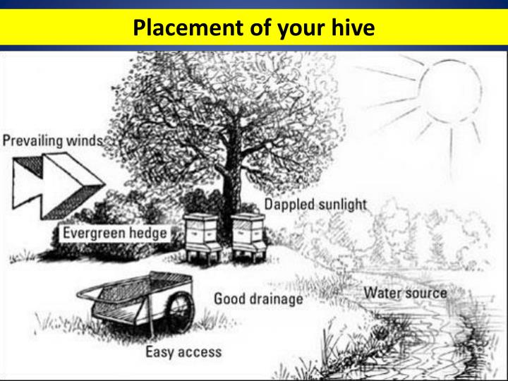 Placement of your hive