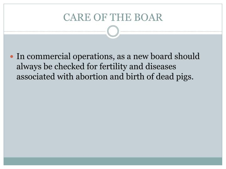 CARE OF THE BOAR