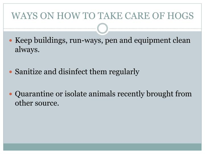 WAYS ON HOW TO TAKE CARE OF HOGS