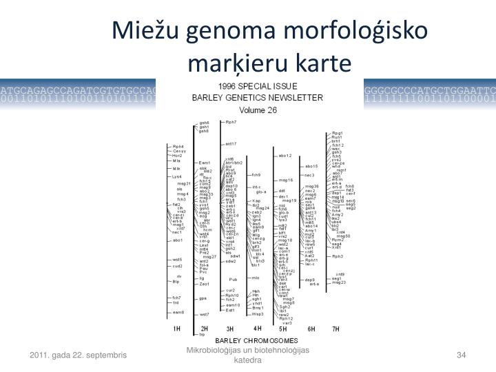 Miežu genoma morfoloģisko marķieru karte