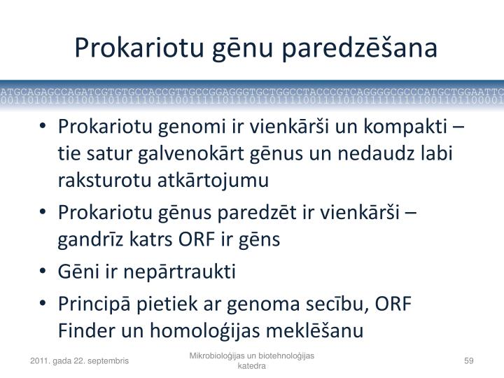 Prokariotu