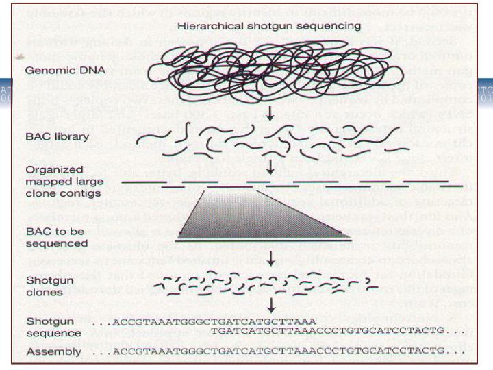 Mikrobioloģijas un biotehnoloģijas katedra