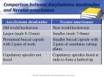 comparison between ancylostoma duodenalae and necator americanus