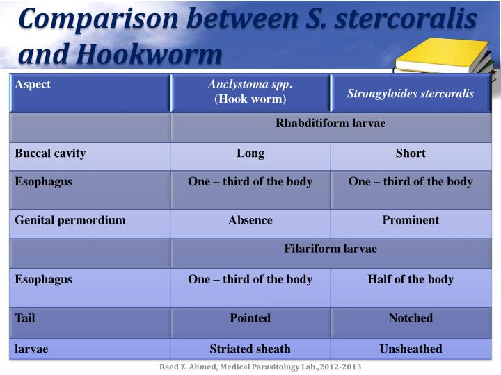 Comparison between S. stercoralis and Hookworm